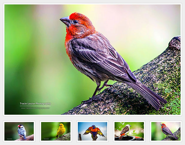 [代码样式]简单的jQuery图片相册插件simpleGal